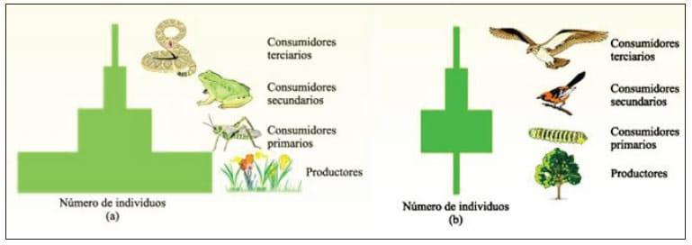 Pirámides ecológicas 17-18 | BLOG DEL ÁREA DE BIOLOGÍA Y GEOLOGÍA DE ...