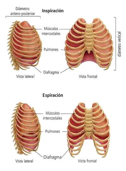 movimientos-respiratorios
