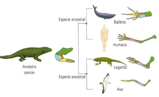Anatomía comparada » Blog de Biología