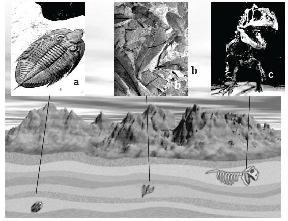 Evidencias del registro fósil