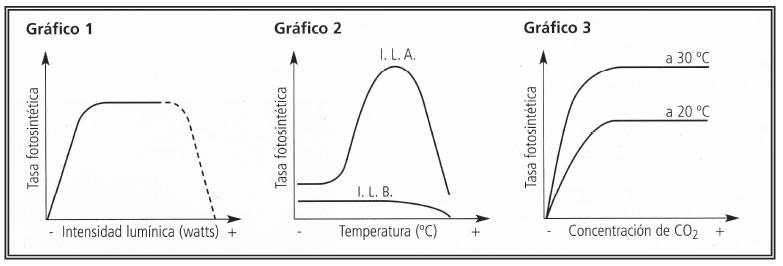 Factores que afectan la tasa de Fotosíntesis