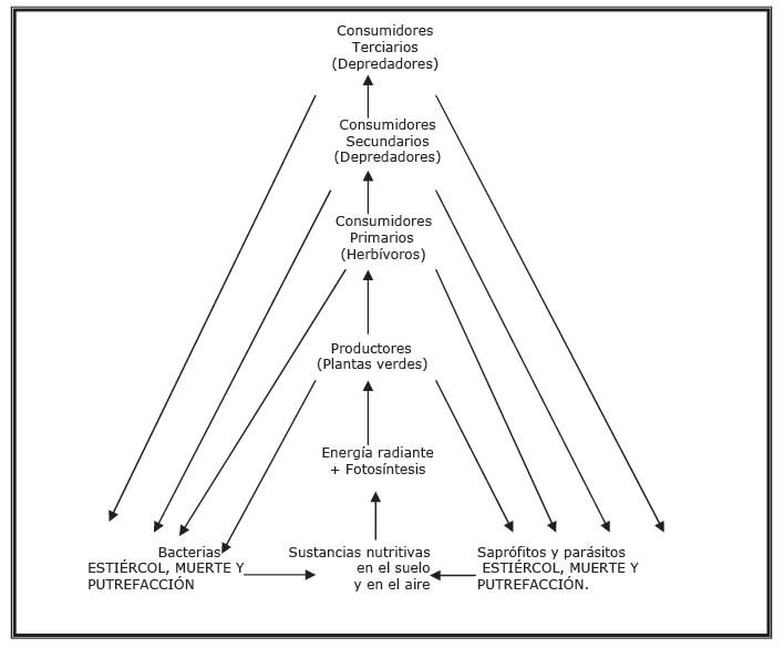 Estructura trófica