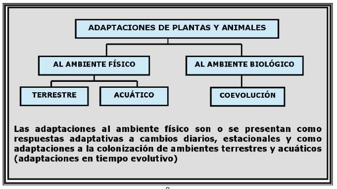 Adaptaciones de los organismos