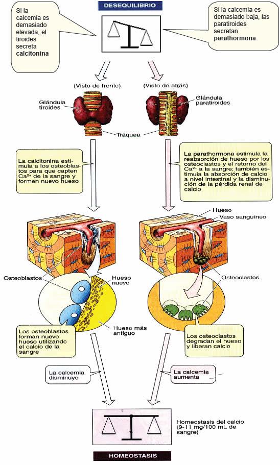 El matrimonio y Ibuprofeno metabolismo tienen más frecuentes de lo que supones