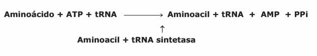 Aminoacil-tRNA sintetasa