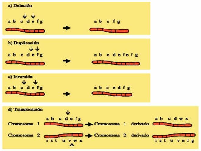 Mutaciones Estructurales