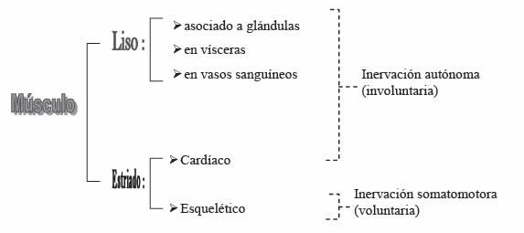 Efectores