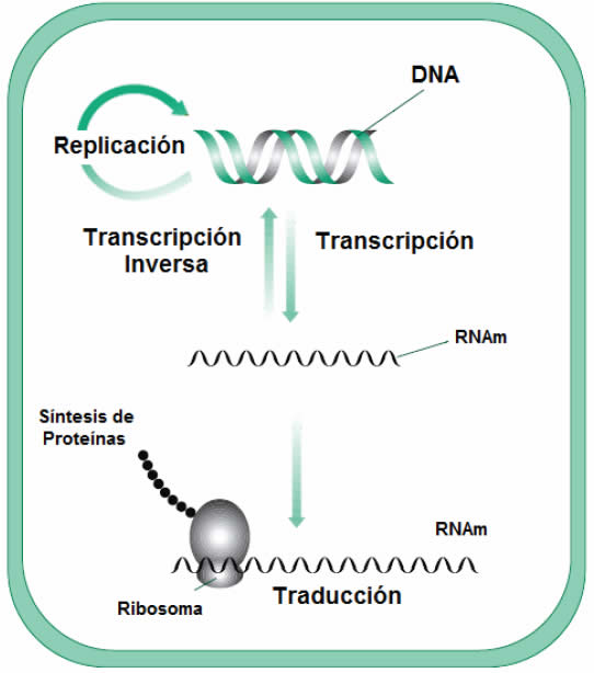 Información a partir del ADN