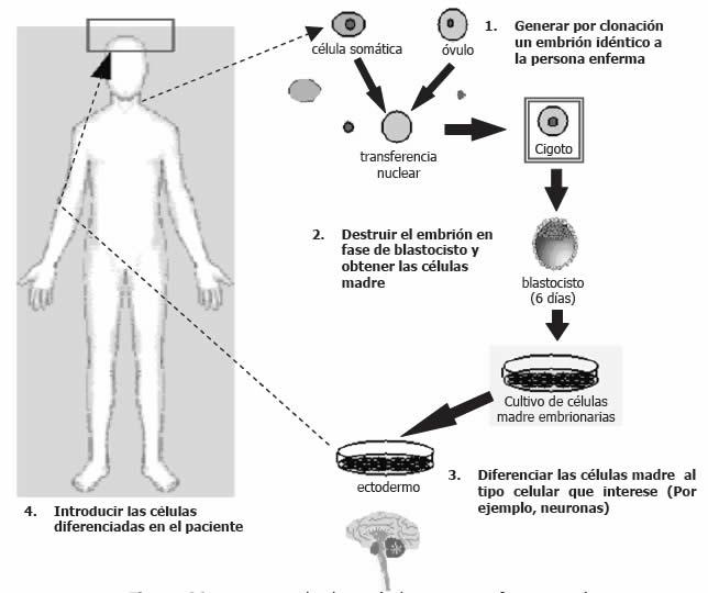 clonación humana con fines terapéuticos